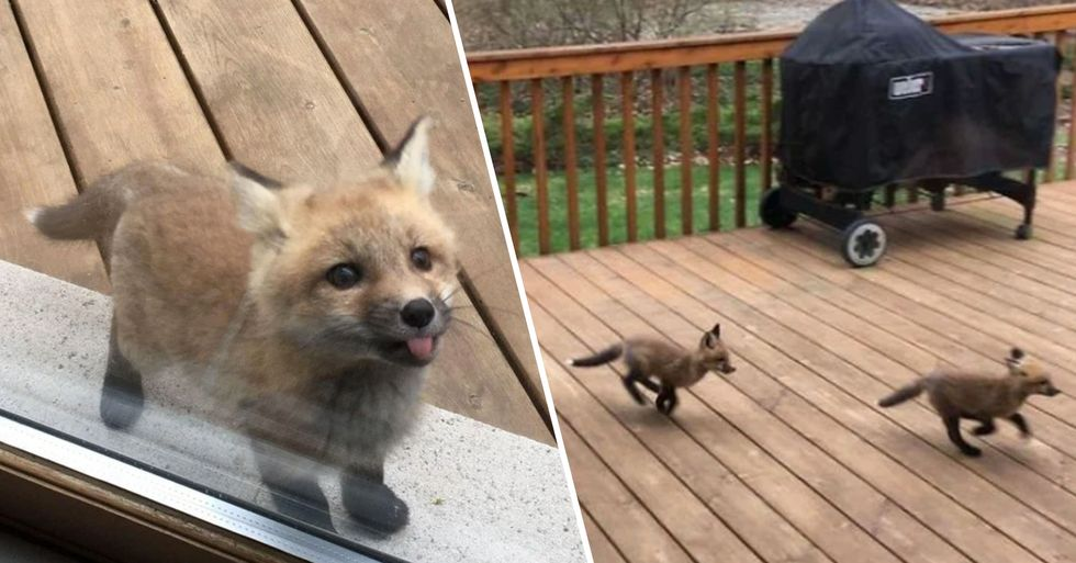 Baby Foxes Show up at a House and the Pictures Are so Cute
