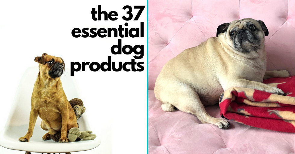 The 37 Essential Products All Dog Owners Need