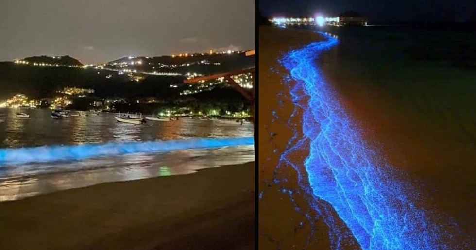 Acapulco Beach Waves Light up With Blue Bioluminescent Plankton