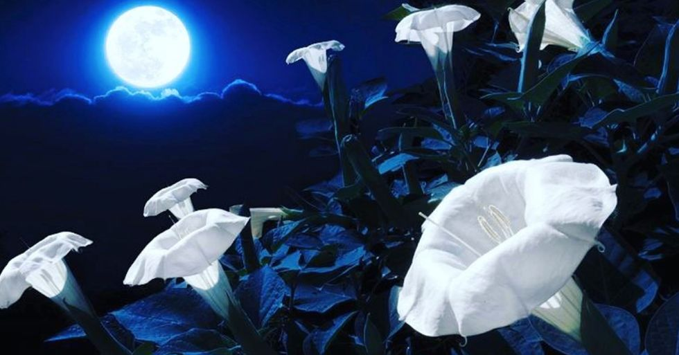 You Can Plant Your Own Moon Garden That Blooms at Night and It's Magical