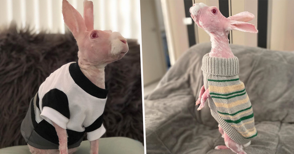 Rare Hairless Rabbit Becomes Instagram Famous After Being Saved From Euthanasia