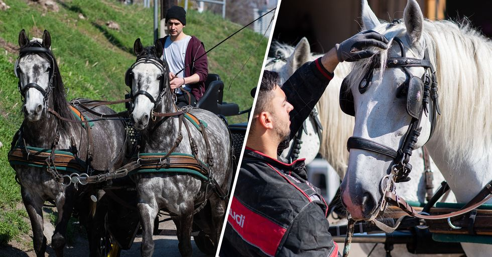 Chicago Bans Horse-Drawn Carriages From 2021