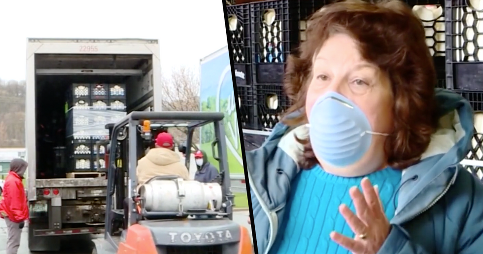 Dairy Farms in New York Are Donating Unsold Milk to the Less Fortunate Rather Than Dumping It