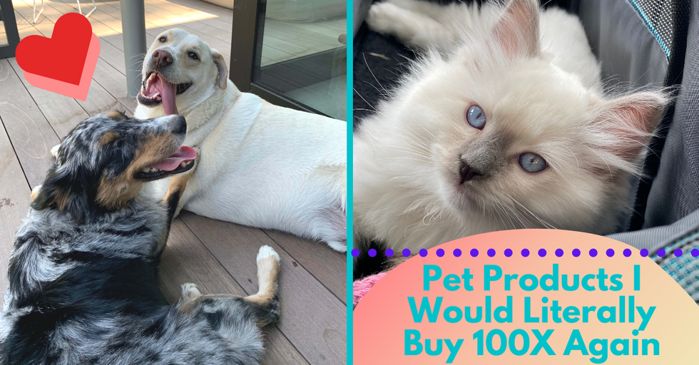 Pet Products I Bought, Loved, and Would Literally Buy 100X Again