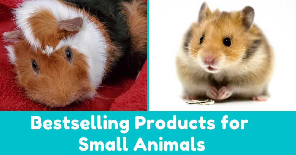 The 19 Bestselling Rabbit, Guinea Pig, and Hamster Products