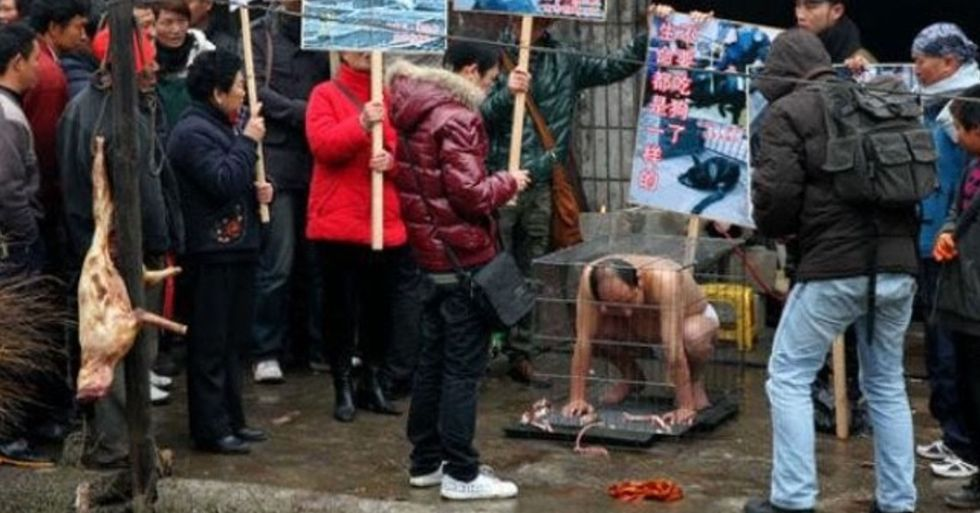 Chinese Activist Locks Himself in Cage Outside Dog Slaughterhouses and Demands They Shut