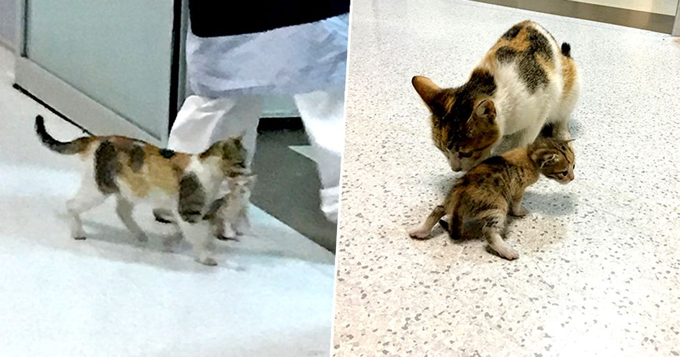 Mother Cat Brings Ill Kitten to the Hospital, Medics Rush to Help