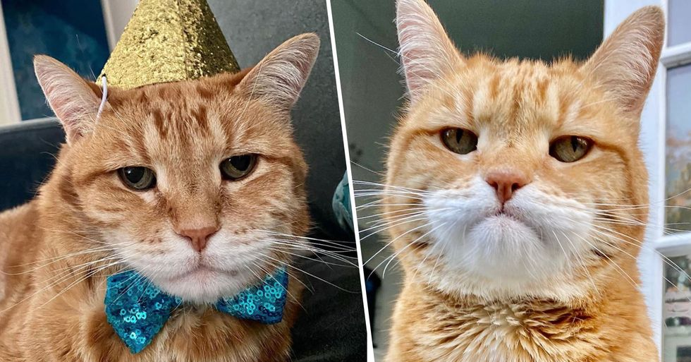 Marley the Cat Was Born With a 'Monday Morning' Face and He's Taking Over the Internet
