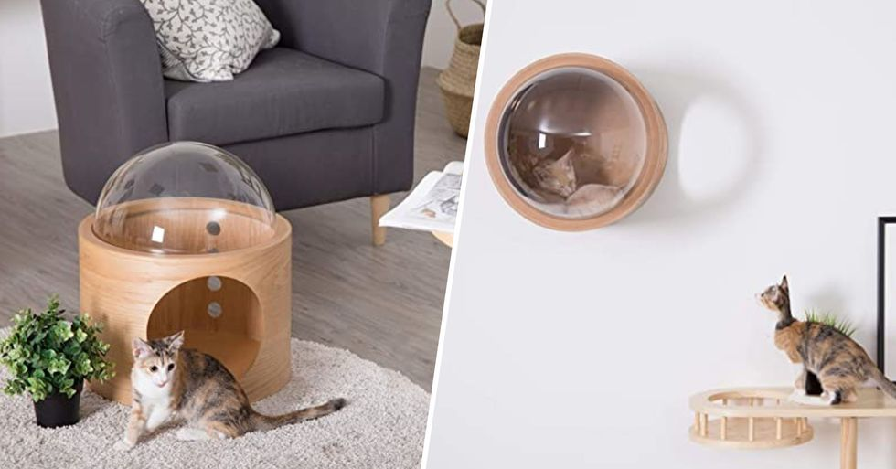 Your Cat Needs This Wall-Mounted Bubble Window Bed