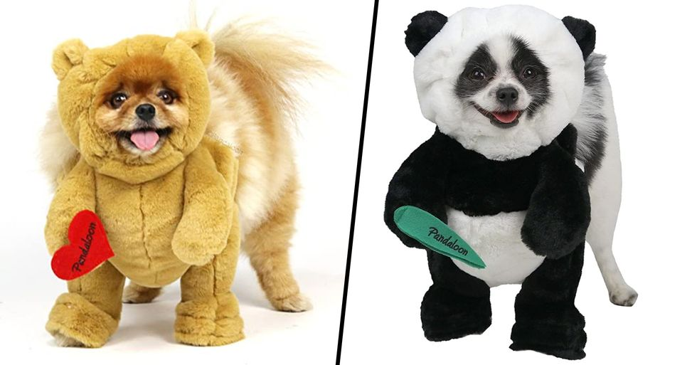 You Can Now Buy Animal Costumes for Your Dog and They're Everything I Never Knew I Needed