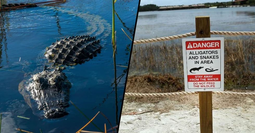 Manicurist 'Very Calm' as She's Eaten by an Alligator