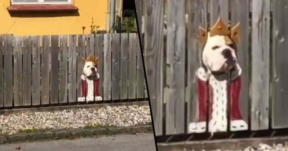 Bulldog Loves Watching Street Through Holes so Much Owners Paint Costumes on the Fence