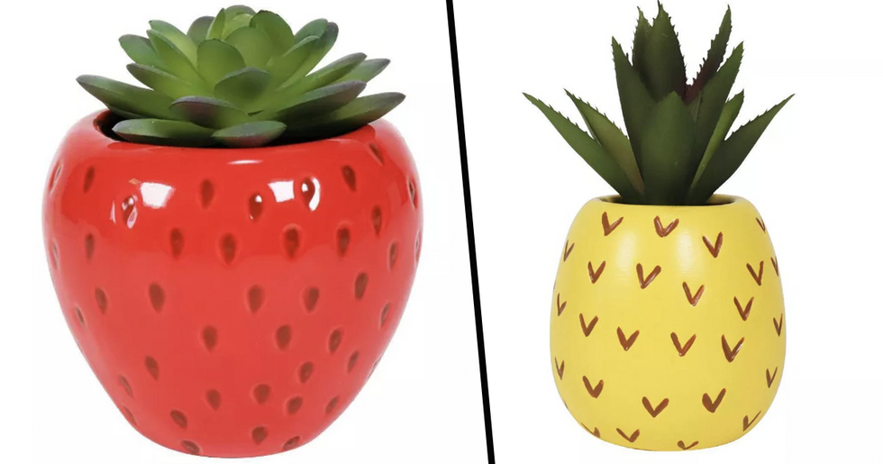 Target Has Launched A Whole Range Of Fruit Themed Succulents