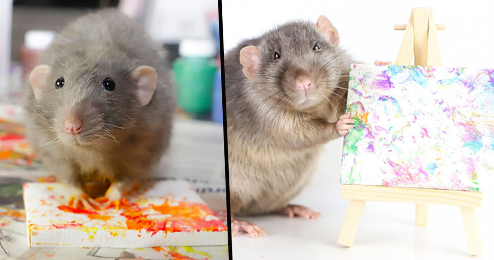 Adorable Rats Create Miniature Pieces of Art and Their Work Is Sold out