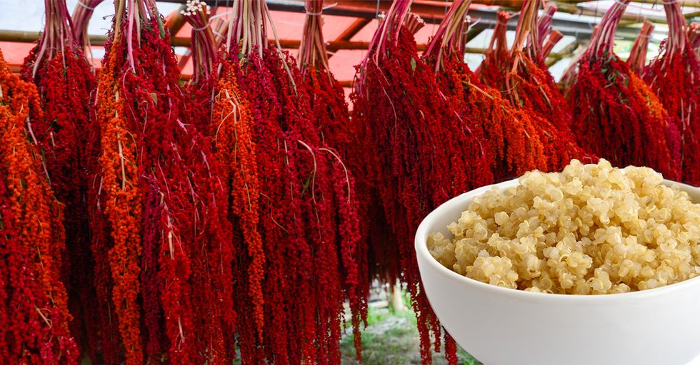 19 Incredible Photos of Foods Growing (in Places You'd Never Expect)