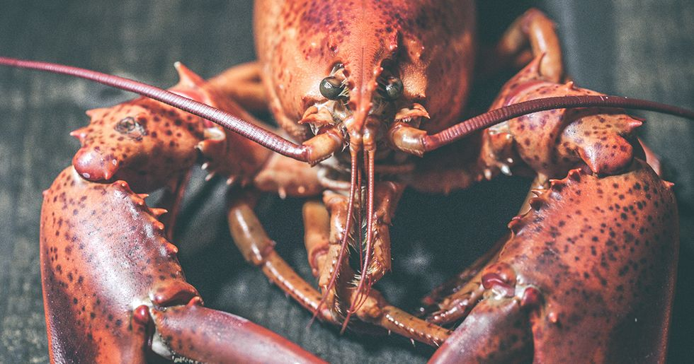 This Amazing Twitter Thread About Lobsters, Aging, and Death Will Blow Your Mind