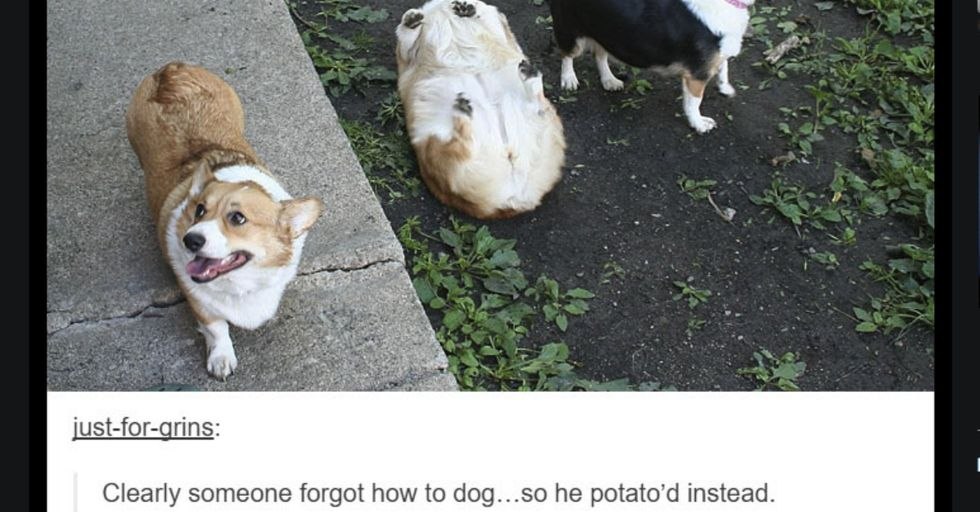 Funny and Adorable Tumblr Posts That Capture Dogs at Their Finest