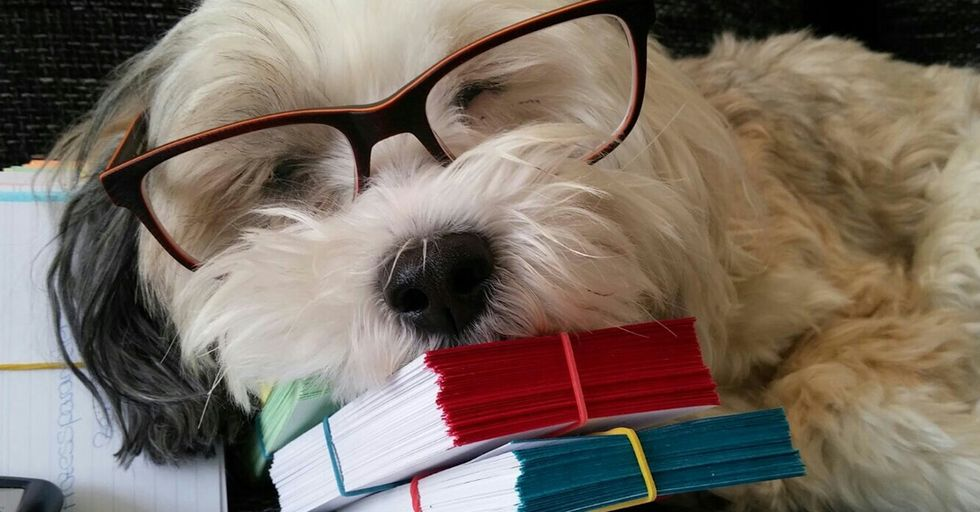Science Says Your Dog Isn't As Smart As You Think He Is