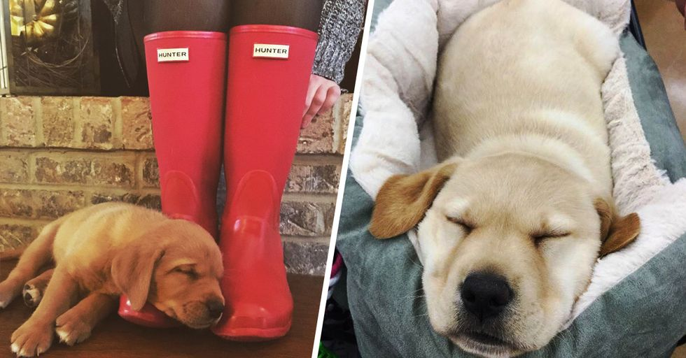 These Are the Cuddliest Pups on the Whole Internet