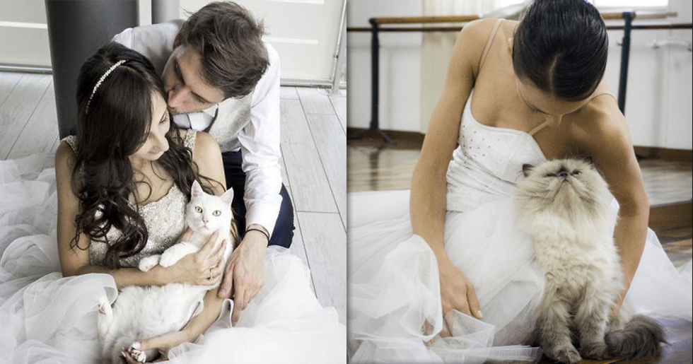 Photographer Takes Wedding Photos of Couples With Their Cats and We're Obsessed