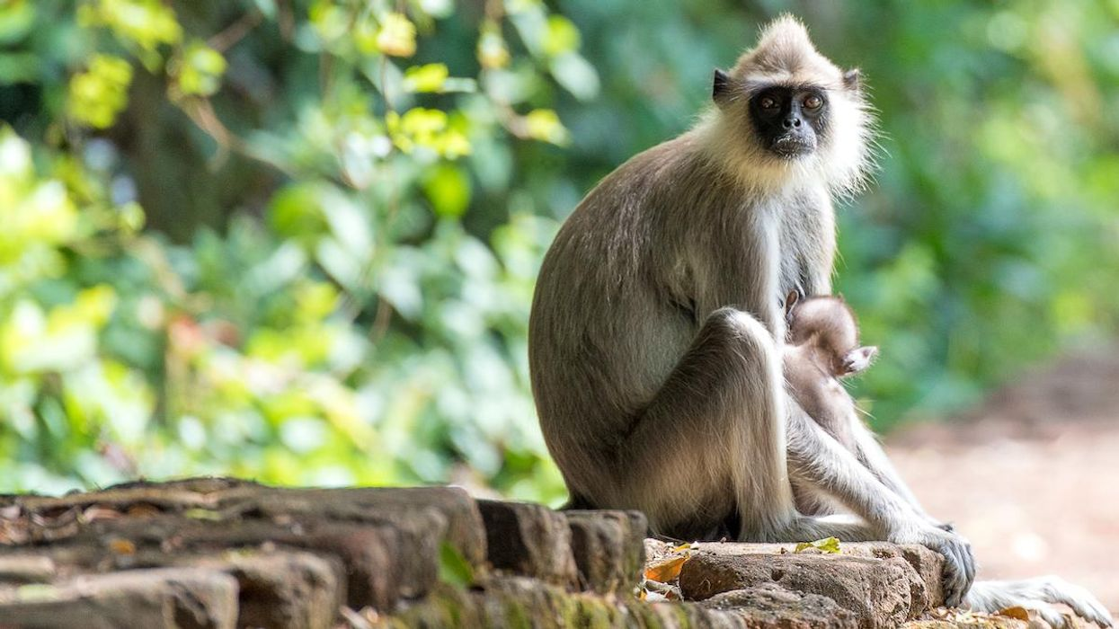 503 New Species Identified in 2020, Including Endangered Monkey