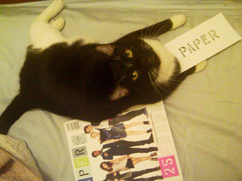 Pets on PAPER: Meet Cristoff