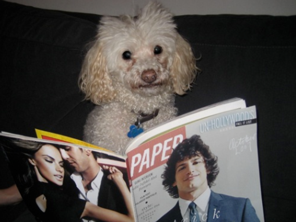 Pets on PAPER: Meet Melville