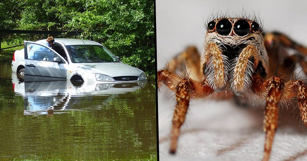 Woman Jumps Out Of A Car And Lets It Roll into A River After Seeing Spider