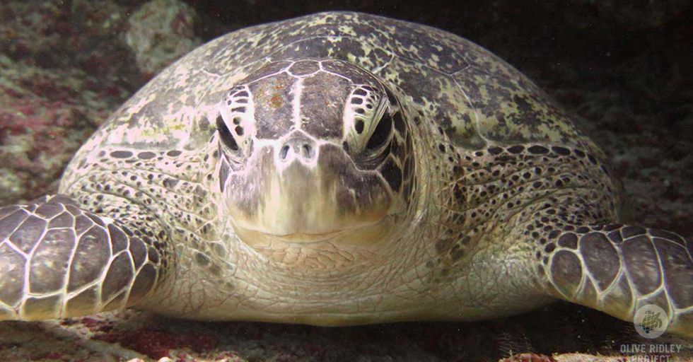 Resort in the Maldives Seeks Summer Interns to Care for Sea Turtles