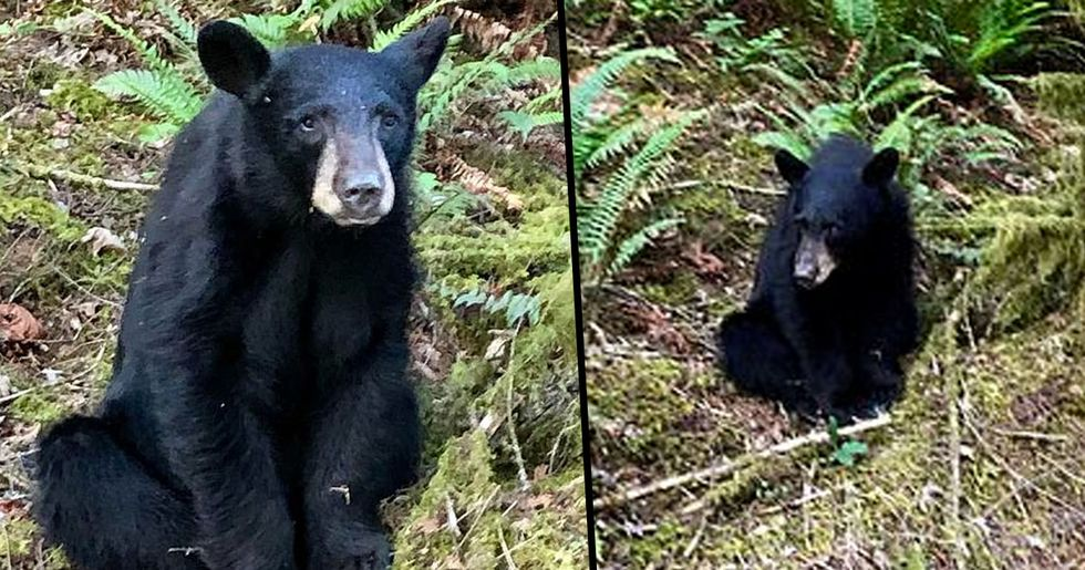Young Bear Shot Dead by Wildlife Officials After He Became Too Friendly With Humans