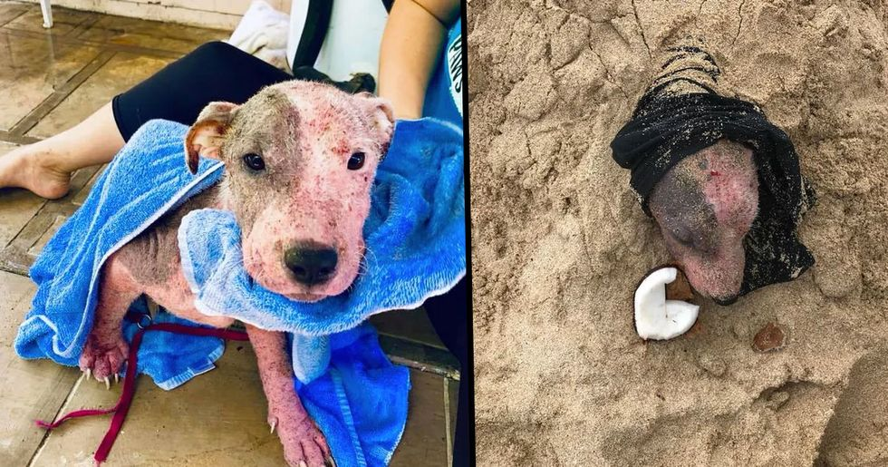 Dog Rescued While Being Buried Alive on Hawaii Beach by Machete-Wielding Man