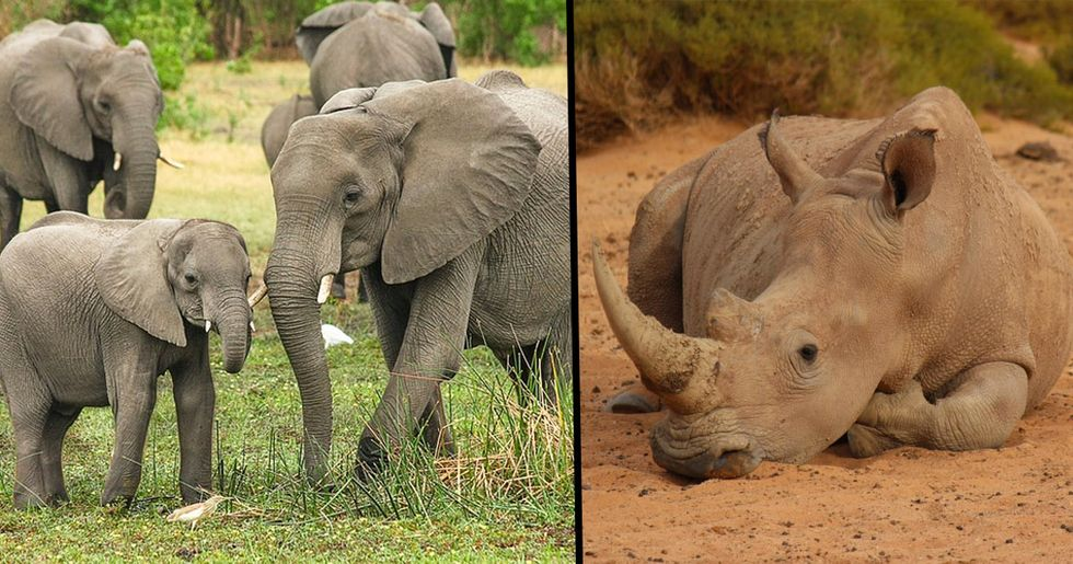 Elephant and Rhino Populations Sky Rocket Thanks to Anti Poaching Force