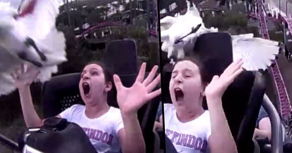 Girl Gets Hit in the Face by a 'Flying Bin Chicken' While Riding Rollercoaster