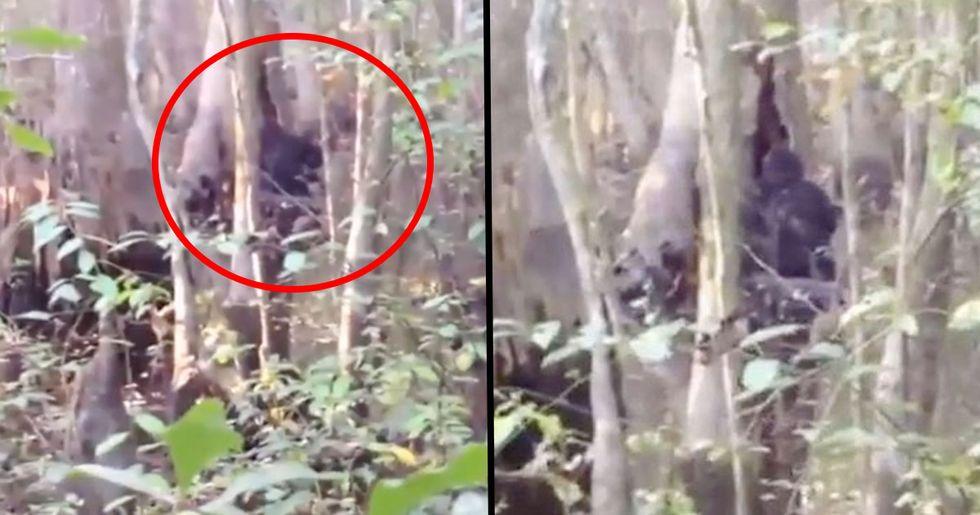 Strange Figure Walking Through U.S. Forest Called 'Best Bigfoot Sighting Ever'