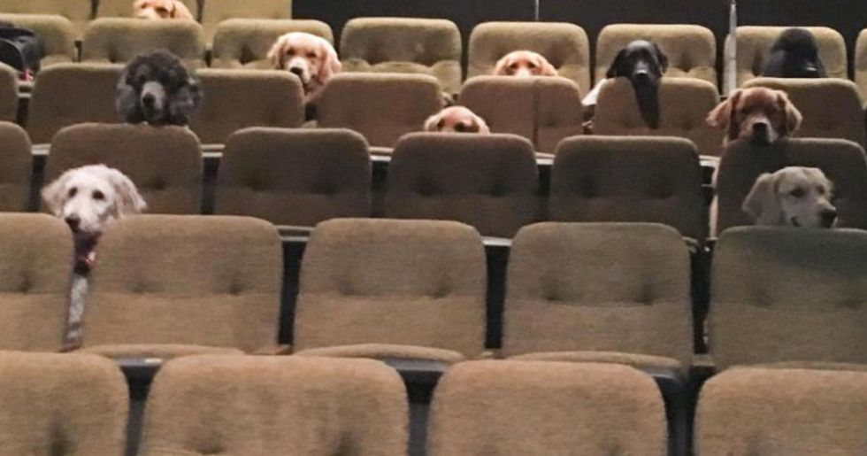 Crew of Canadian Service Dogs Watched Live Musical as Part of Their Training