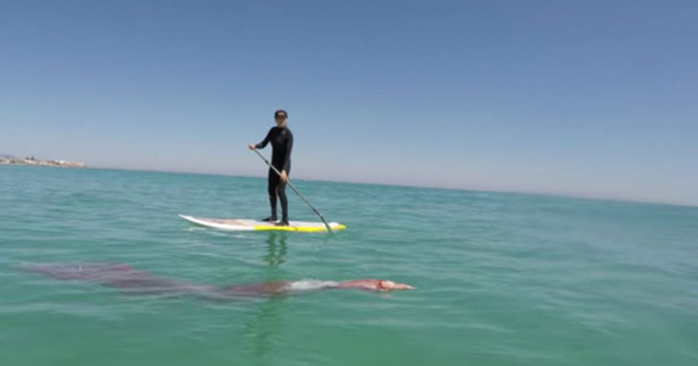 Rare Giant Squid Tries to Ride Guy's Paddle Board