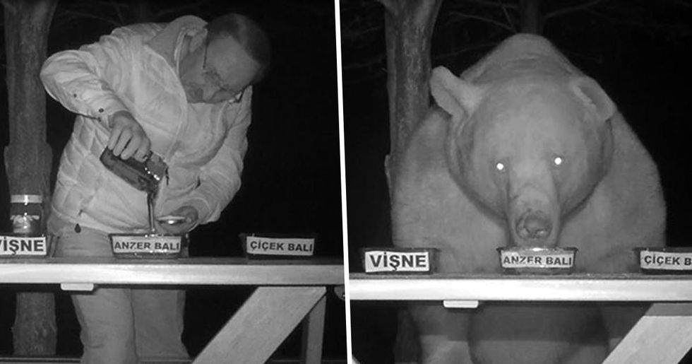 Bears Kept Stealing Honey from Man's Bee Farm so He Turned Them into Honey Tasters