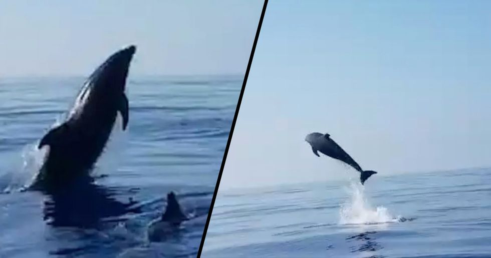 Dolphin 'Jumps for Joy' After Fisherman Save Her Baby from Net