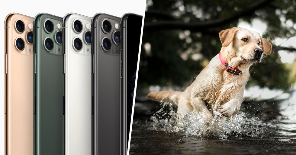 The iPhone 11 Will Have Pet Portrait Mode, so You Can Take Even Better Pup Pics