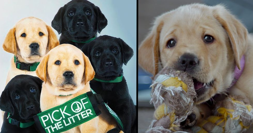 Netflix Release Dogumentary Following Puppies Training to Be Guide Dogs