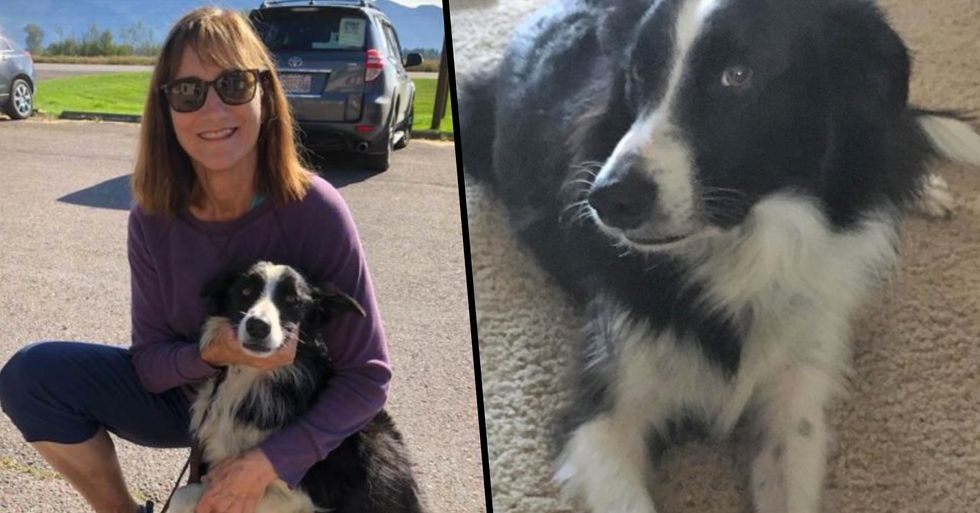 Woman Quits Job and Takes 57 Days to Find Her Lost Dog