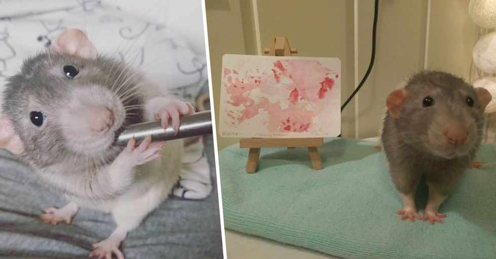 This Rat Has Been Trained to Paint With Its Feet and It's Surprisingly Adorable