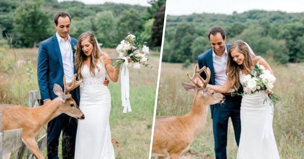 Wild Deer Crashes Wedding Shoot to Eat Bride's Bouquet