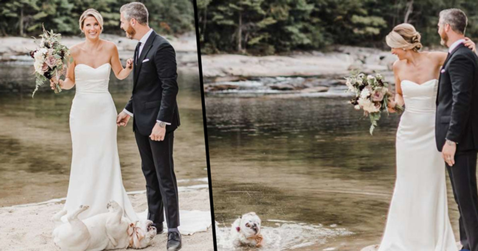 Dog Refuses to Take Parents' Wedding Day Seriously