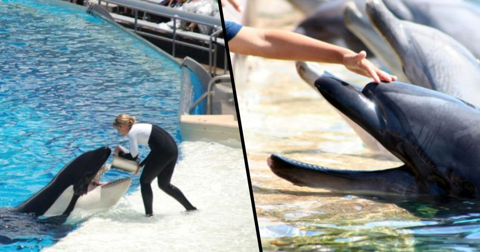 TripAdvisor Bans Ticket Sales to SeaWorld and Attractions With Dolphins and Whales