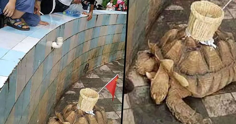 Chinese Zoo Glues Basket to Tortoise's Shell for Tourists to Throw Money In