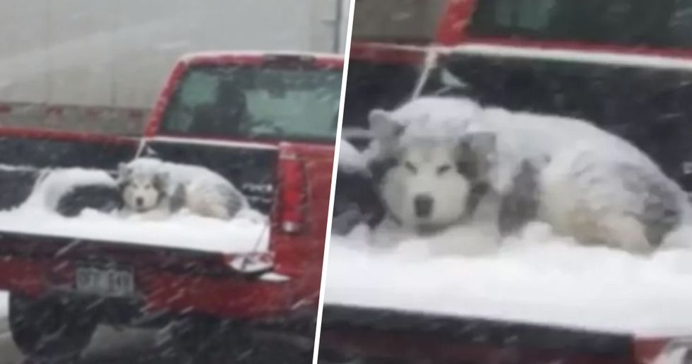 Shocking Images Show Snow Covered Dog Sitting in Back of Moving Truck During Blizzard
