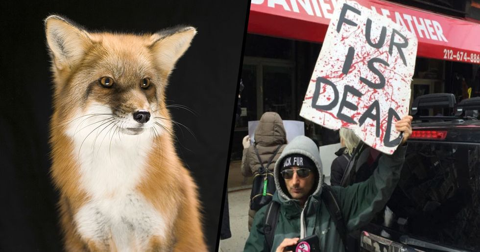 California Becomes First U.S. State to Ban Animal Fur Products