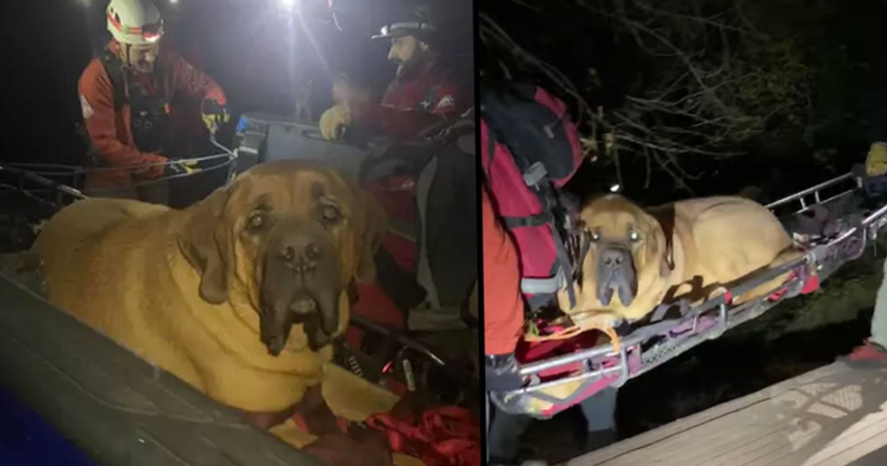 Huge Dog Has to Be Rescued From Top of Mountain After Getting Too Tired to Walk Down
