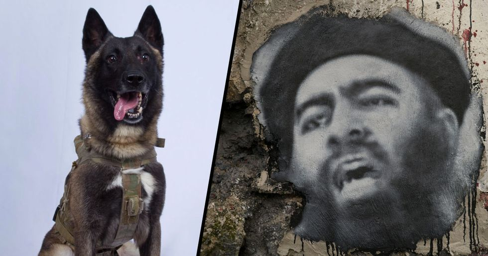 First Photo of Military Dog That Injured Itself Taking Down the ISIS Leader